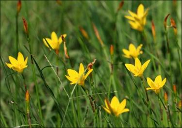 yellowlilypatch2