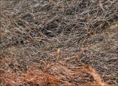 bisonfur